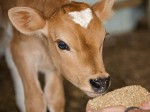 Cattle Market Goes Online Telangana Govt Launches Website F