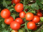 Tomato Prices Soar 40 80 Per Kg Government Keeping Tab