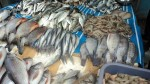 Covid 19 Lockdown King Fish Is Priced At Rs 1260 Per Kg On Online Trading Sites