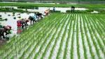 കുട്ടനാട്ടിലെ നെല് കര്ഷകര് കടുത്ത ദുരിതത്തില്; വില കുടിശ്ശിക 149 കോടി രൂപ...എന്ന് തീരും ഈ കഷ്ടം