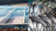 മത്സ്യമേഖലയിൽ സ്വയം സംരംഭകത്തിലൂടെ വിജയ ഗാഥയുമായി രാജിയും സ്മിജയം