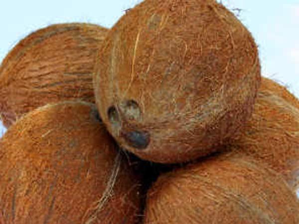 Coconut price increased - Malayalam Goodreturns