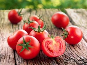 Now Tomato Prices Hit 100 Kg