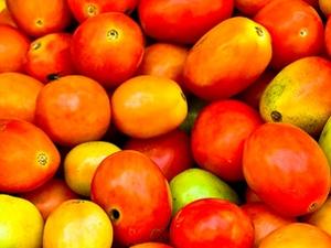 Tomato Prices Fall Rs 3 Per Kg