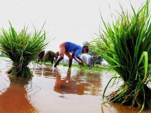 Farm Loans Will Waive Up To 2 Lakh