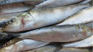 Sardines Price In Kerala