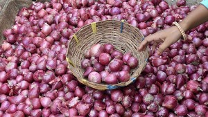 Slight Decline In Onion Prices