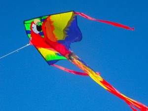 Covid Period Good For Kite Makers Sales Fly